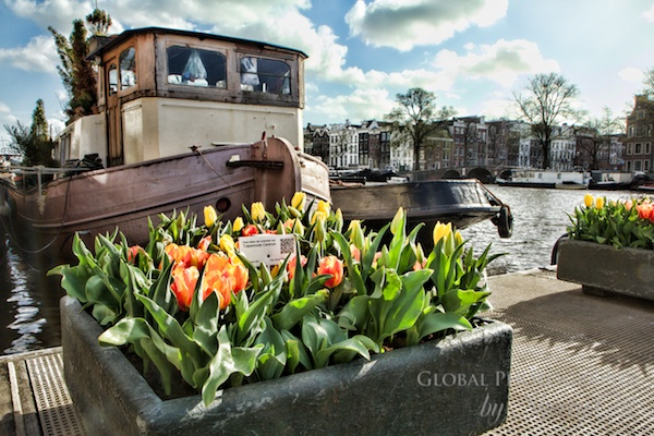 Sherry Ott - Amsterdam tulips