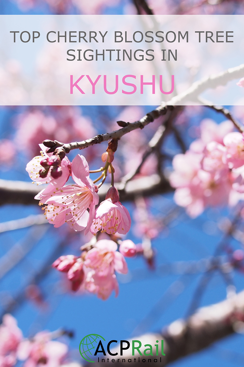 Top Cherry Blossom Tree Sightings in Kyushu
