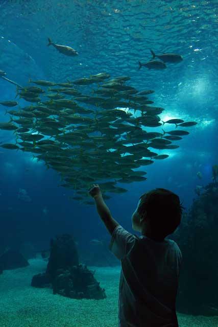 jaboc-oceanarium-1
